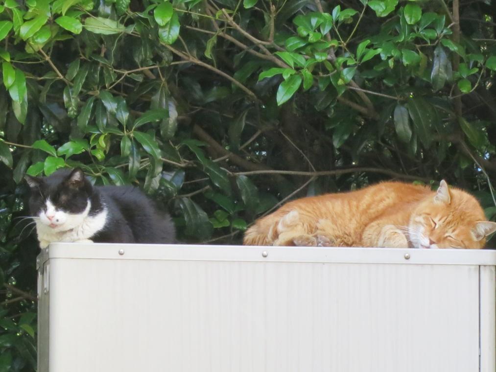 【猫】暖かいので_f0141609_7404745.jpg