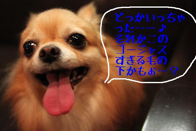 b0130018_2333075.jpg