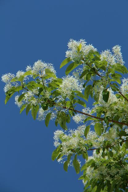 珍しい花&面白い名称の木_d0150720_6563471.jpg
