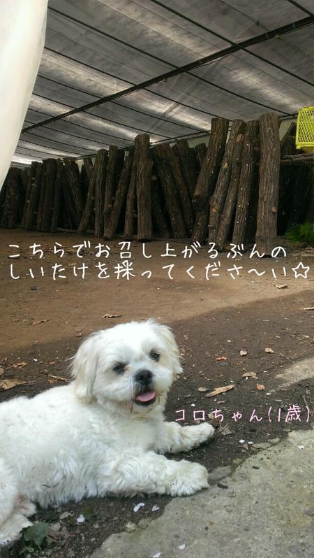 f0194321_237793.jpg