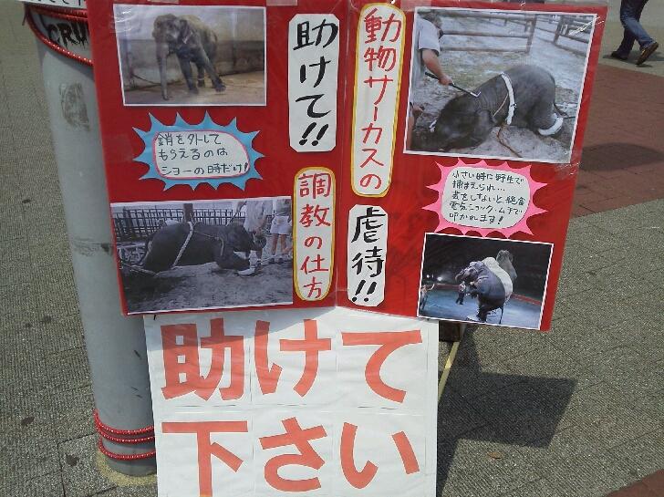 4月28日 動物問題パネル展in桜木町 : エリザベスのエロテロリスト