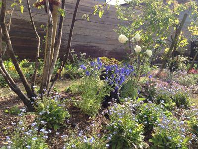 春の庭がようやく☆_b0253627_16474412.jpg