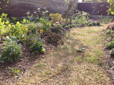 春の庭がようやく☆_b0253627_16474574.jpg