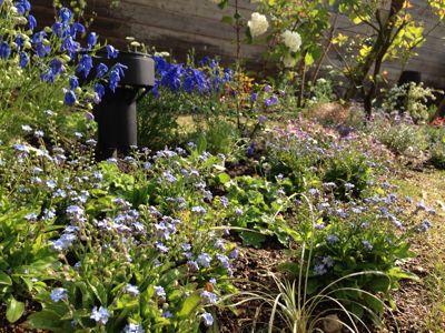 春の庭がようやく☆_b0253627_1647513.jpg