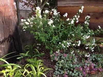 春の庭がようやく☆_b0253627_16475234.jpg