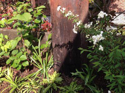 春の庭がようやく☆_b0253627_16475378.jpg