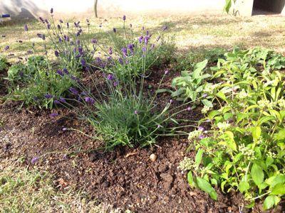 春の庭がようやく☆_b0253627_16475422.jpg