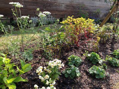 春の庭がようやく☆_b0253627_16475529.jpg