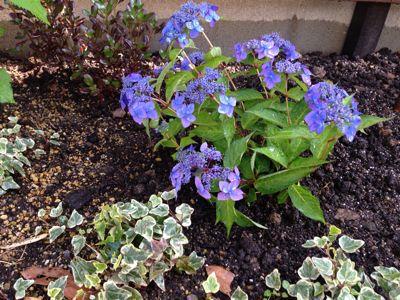 春の庭がようやく☆_b0253627_16475610.jpg
