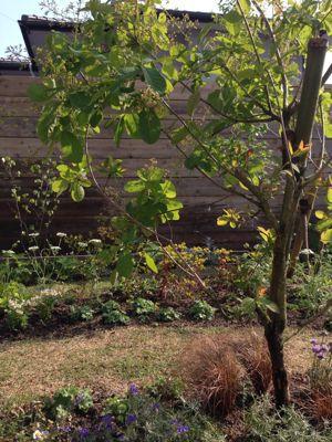 春の庭がようやく☆_b0253627_16475975.jpg