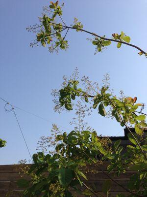 春の庭がようやく☆_b0253627_1648064.jpg