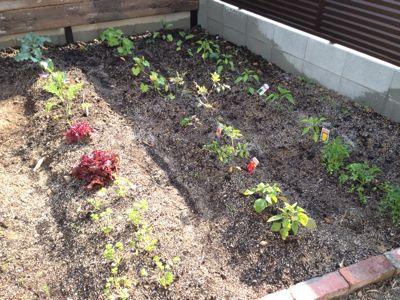 春の庭がようやく☆_b0253627_164863.jpg