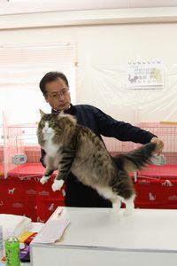AJC CAT SHOW thank you~#2_f0168339_16391268.jpg
