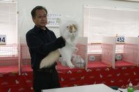 AJC CAT SHOW thank you~#2_f0168339_16391847.jpg