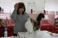 AJC CAT SHOW thank you~#2_f0168339_16393128.jpg