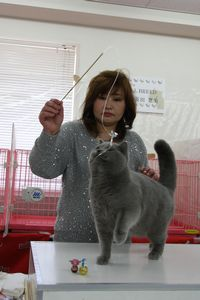 AJC CAT SHOW thank you~#2_f0168339_16394944.jpg