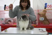 AJC CAT SHOW thank you~#2_f0168339_164001.jpg