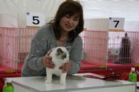AJC CAT SHOW thank you~#3_f0168339_16404486.jpg