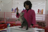 AJC CAT SHOW thank you~#3_f0168339_1641063.jpg