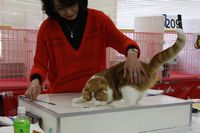 AJC CAT SHOW thank you~#3_f0168339_1641164.jpg