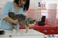 AJC CAT SHOW thank you~#4_f0168339_16415831.jpg