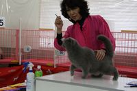AJC CAT SHOW thank you~#3_f0168339_1641661.jpg