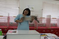AJC CAT SHOW thank you~#4_f0168339_16421774.jpg
