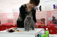 AJC CAT SHOW thank you~#4_f0168339_16423570.jpg