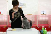 AJC CAT SHOW thank you~#4_f0168339_16424537.jpg