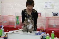 AJC CAT SHOW thank you~#4_f0168339_16425095.jpg