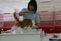 AJC CAT SHOW thank you~#4_f0168339_1642844.jpg