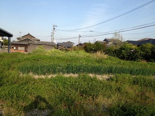 菜園再開_b0161750_22211499.jpg