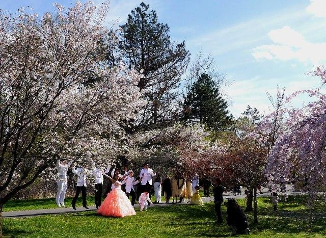 NY郊外の桜&アンチエイジングの秘訣_b0173754_027344.jpg