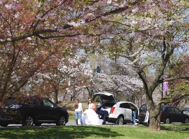 NY郊外の桜&アンチエイジングの秘訣_b0173754_0274465.jpg