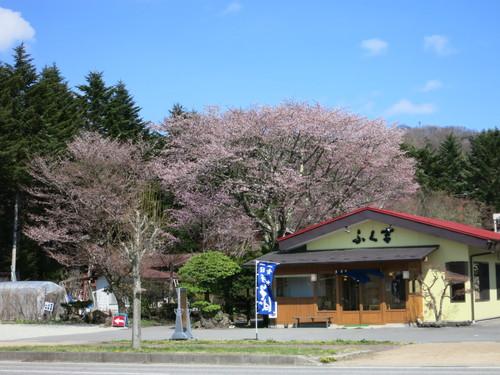 山桜が満開です♥ _f0236260_1247100.jpg