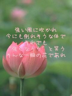 f0145976_21252083.jpg