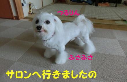 b0193480_15581167.jpg