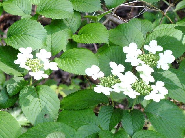 4月26日 県立四季の森公園_e0145782_20435533.jpg