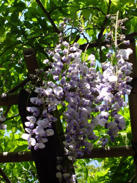 4月26日 県立四季の森公園_e0145782_20442358.jpg