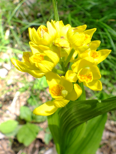 4月26日 県立四季の森公園_e0145782_20463667.jpg