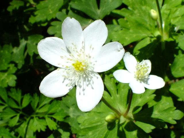 4月26日 県立四季の森公園_e0145782_20524158.jpg