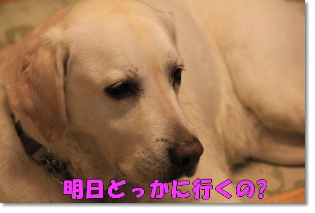 b0136683_223406.jpg