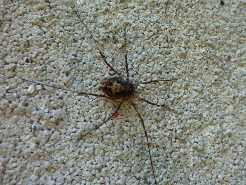 動かない蜘蛛_c0177195_13534820.jpg