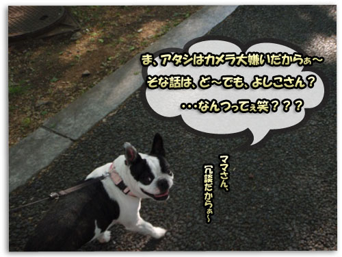 a0086698_19162712.jpg