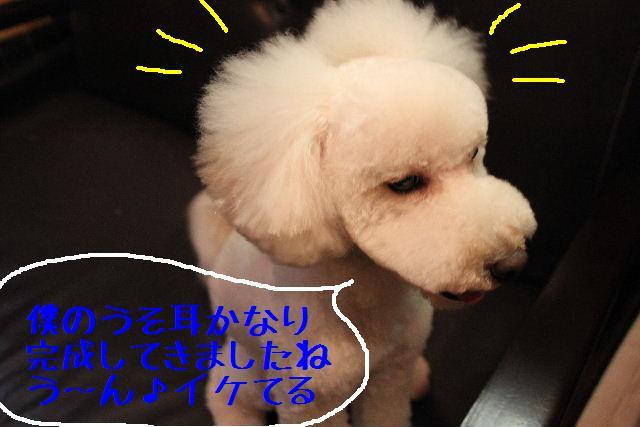 b0130018_012557.jpg