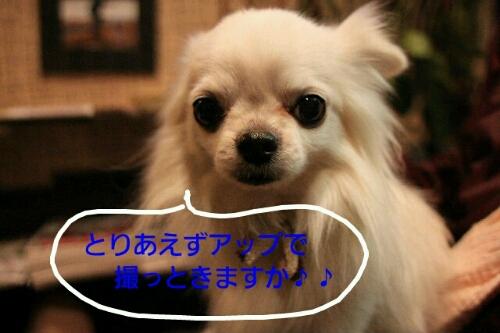 b0130018_21244013.jpg