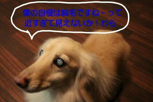 b0130018_23193086.jpg