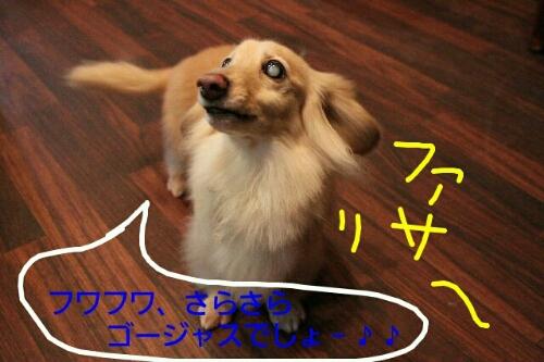 b0130018_2320219.jpg