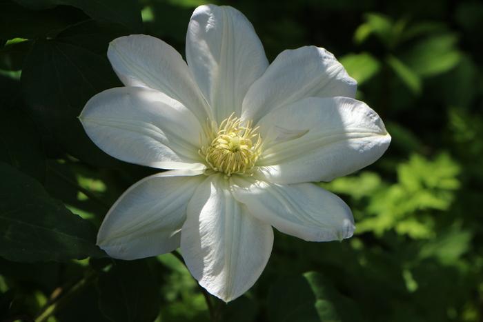 庭の花を写す_d0150720_8335630.jpg