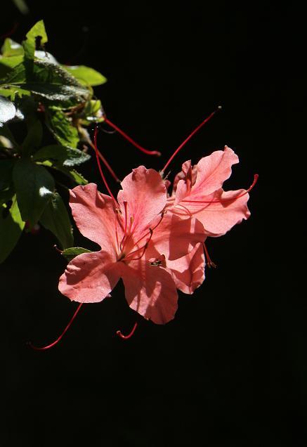 庭の花を写す_d0150720_8362145.jpg